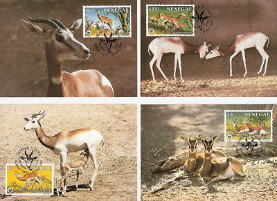 WWF MAXIMUM CARD SENEGAL