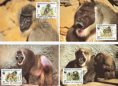 WWF MAXIMUM CARD CAMEROUN